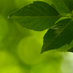 A contribuição da SMC para a criação de um mundo mais sustentável